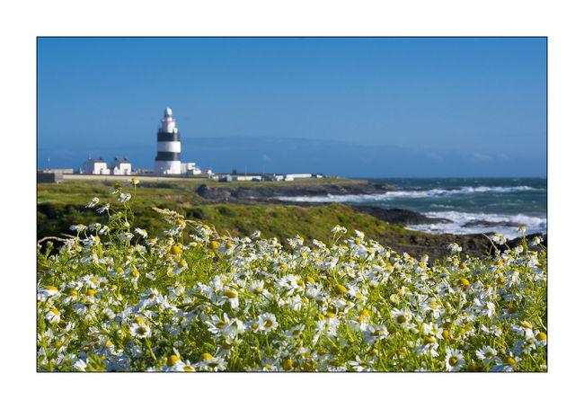 Hook Head, Ireland Nature Camomiles No People Sea Sea And Sky