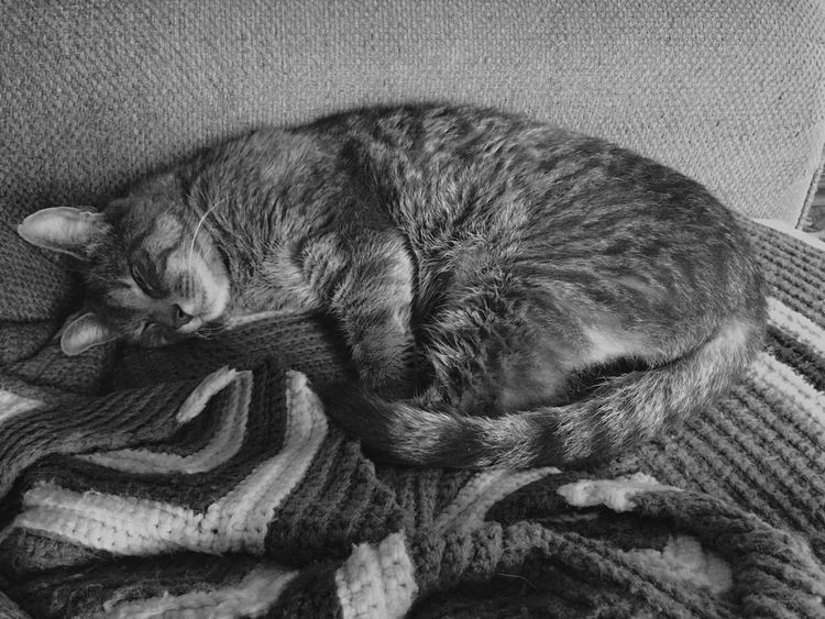 Noah hugging his favorite quilt Iphone5s IPhoneography IPhone Photography Blackandwhite Photography Hueless Home Sweet Home Eye Em Edit