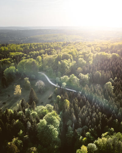 DJI X Eyeem From Above  Green Color Nature Path Road Trees Aerial View Day Dronephotography Environment Flying Forest High Angle View Land Landscape Lens Flare Outdoors Scenics - Nature Schwäbische Alb Spring Sunrise Sunset Thick Forest Tranquil Scene