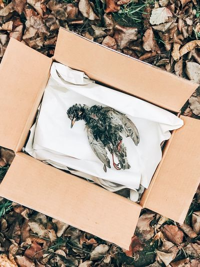 High Angle View Of Dead Bird In Box By Dried Leaves On Field