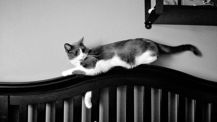 KiMartinez Photography Kitty Cat Sassypants B&w Lifestyle Enjoying Life Hanging Out Jomo Relaxing I Love My Cat