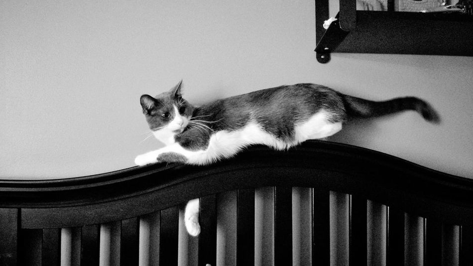 KiMartinez Photography Kitty Cat Sassypants B&w Lifestyle Enjoying Life Hanging Out Jomo Relaxing I Love My Cat