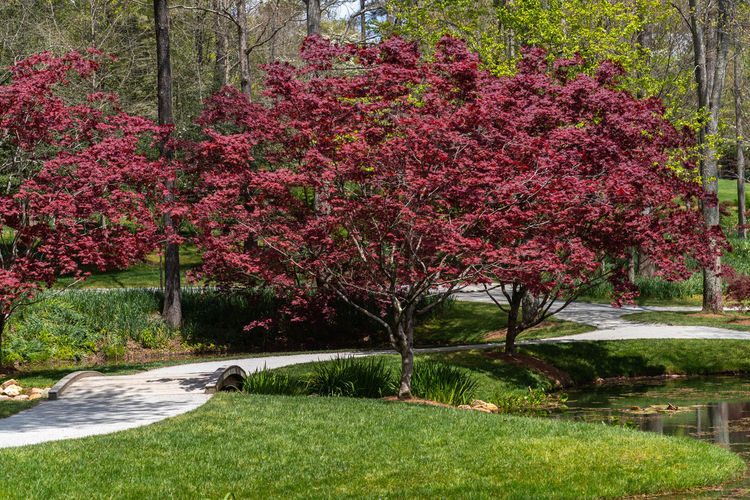 View of red flower trees in garden