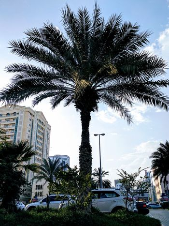 Just looked ..... Tree Sky Outdoors Palm Tree No People Growth City Travel Destinations Day Nature Skyscraper