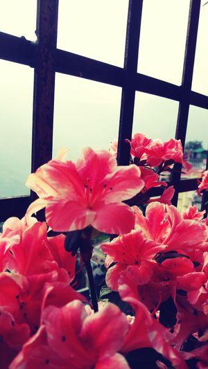 Sprashre No Filter Spring Flowers Onsetofspring