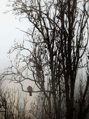 Tree Nature Silhouette Beauty In Nature No People Tranquility Branch Bird Foggy Morning Instagramer Umeugram Monotone
