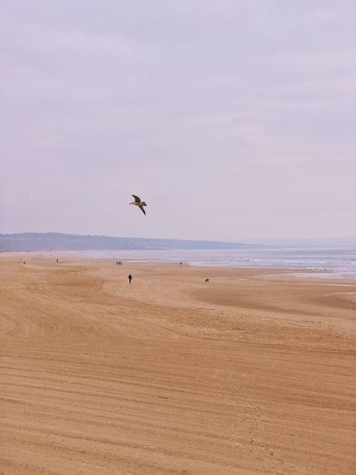 Land Beach Bird Animal Themes Vertebrate Animal Sand Sky Sea Flying Water Animal Wildlife Animals In The Wild Beauty In Nature Tranquility Day Scenics - Nature Nature