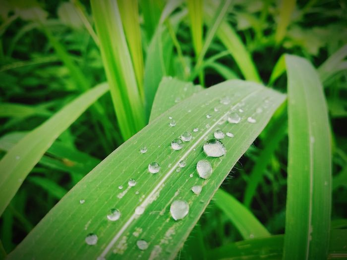 Dew drops Water Leaf Drop Wet Close-up Animal Themes Grass Plant Green Color