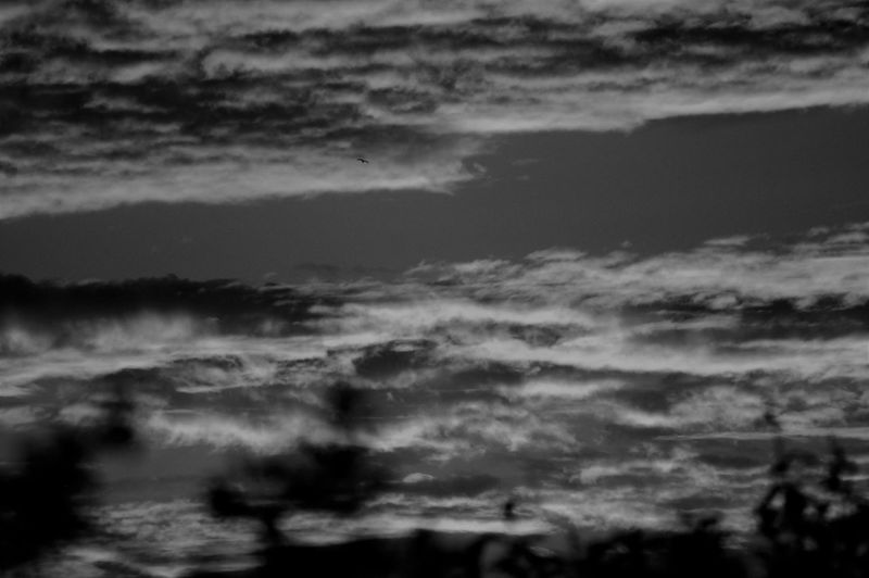 Sunset clouds in black and white including bird. Cloud - Sky Sky Cloudscape Dramatic Sky Romantic Sky Atmospheric Mood Blackandwhite Sunset Nature Beauty In Nature Tranquility Tranquil Scene Scenics - Nature No People Backgrounds Idyllic Sunlight Shadow Silhouette Rural Scene Non-urban Scene Plant Tree Plant Part Branch Leaves Meteorology Environment Dusk Outdoors Low Angle View Focus On Background Full Frame