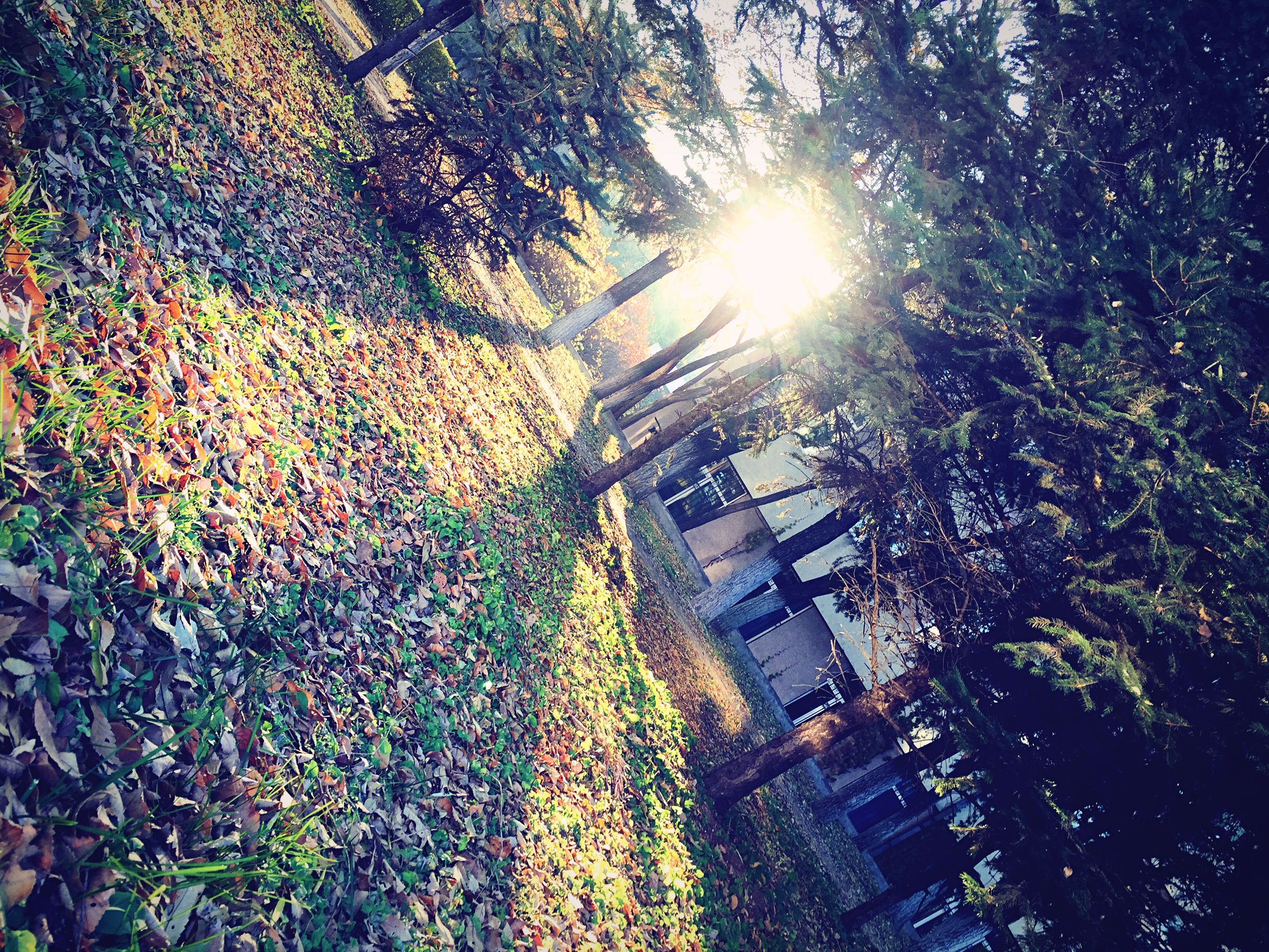 building exterior, tree, sunlight, architecture, sunbeam, sun, growth, built structure, lens flare, sunny, nature, low angle view, day, city, outdoors, bright, no people, plant, branch, leaf