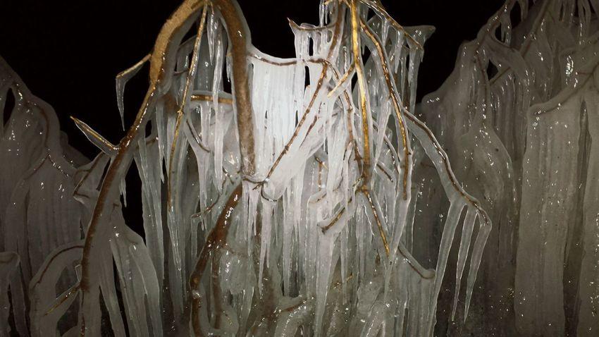 It's Cold Outside Lake Ice Splashing Waves Freezing Ice Trees Lake Mendota UWMadison