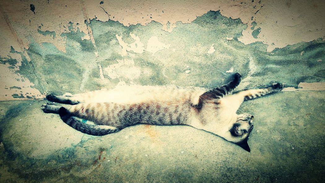 My lovelycat Cat Lovely Lovelycat Annimals CatEyeEm Relaxing Catcollection