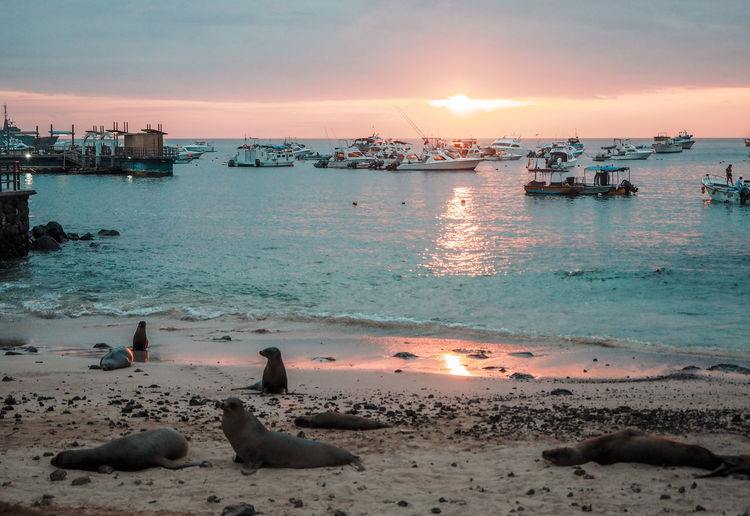 Sea lions on Galapogos beaches Islands Sea Lion Beach Beachphotography Blue Boat Ecuador Galapogos Land Nature No People Outdoors Sailing Sea Sea Life Seal Sky Water