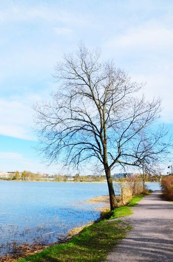 A lone tree Nature Sky Tree Water Beauty In Nature Outdoors Tranquility Bare Tree Scenics No People Tranquil Scene Day Sea Landscape Road Grass Branches And Leaves Branches And Sky Branches Coloursplash Colours Of Nature Colours Beauty In Nature Standing