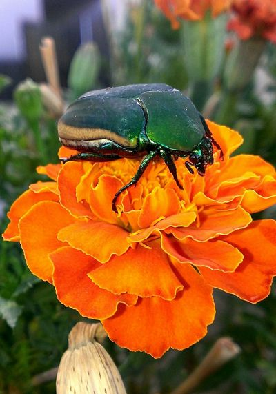 Today I met a bug, her name is June. Taking Photos Check This Out Nature Colorful Desert Beauty Naturelovers Insects  Frommygarden Andrography Open Edit For Everyone