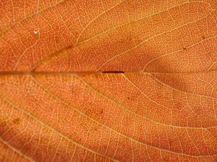 Full frame shot of orange leaf