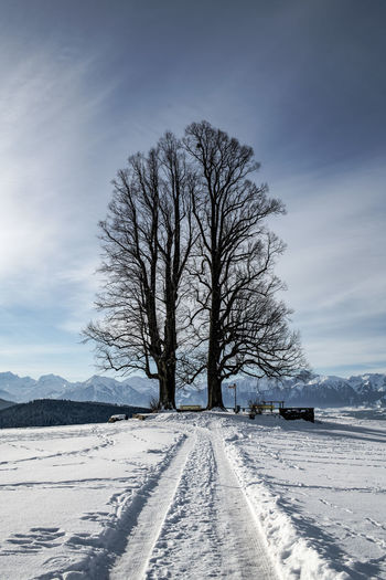 Winter Snow Cold Temperature Bare Tree Tree Outdoors White Color Covering Field Land Majestic Majestic Tree