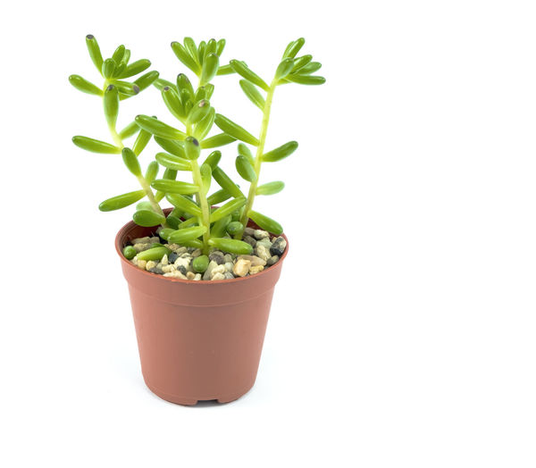 Beauty In Nature Beginnings Close-up Copy Space Cut Out Flower Pot Food Freshness Green Color Growth Herb Houseplant Indoors  Leaf Nature No People Plant Plant Part Potted Plant Small Studio Shot White Background