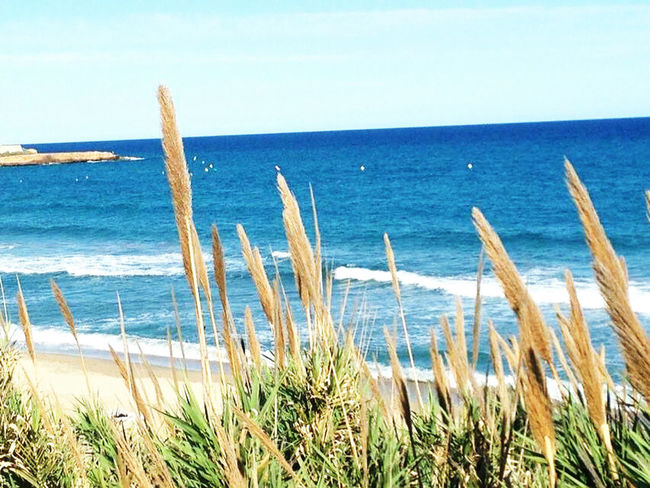 Fresh Sea Water Horizon Over Water Nature Scenics Beauty In Nature Beach Tranquil Scene Tranquility Wave No People Outdoors Day Sand Sky Plant Plants Landscape Photography Tourism Tarragonaturisme Traveling Travel Europe Tarragona