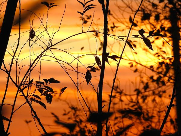 Beauty In Nature Close-up Fall Sunset Nature No People Orange Orange Color Outdoors Plant Silhouette Sky Sunset Trees