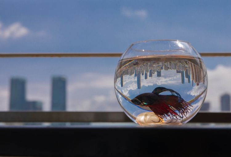 Transparent Glass - Material Reflection Focus On Foreground Day Close-up No People Fishbowl Architecture One Animal Water Outdoors Goldfish Animal Themes Building Exterior Sky Nature lonely planet