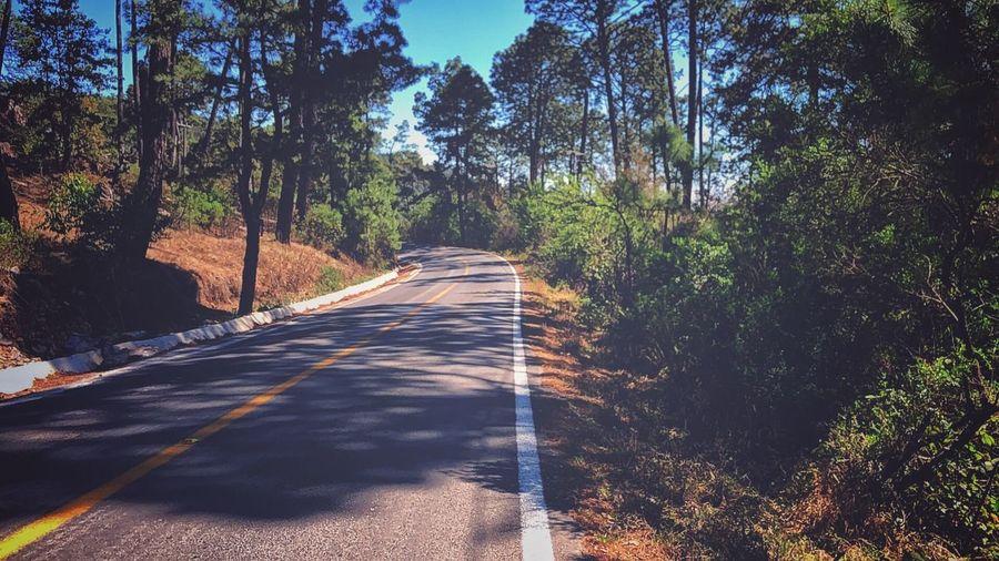 Tapalpa Jalisco Tree Plant Direction The Way Forward Road Transportation Sunlight Nature Shadow Day