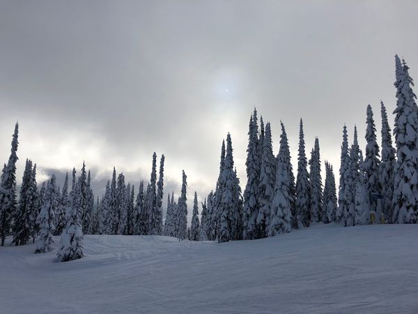 Snow ski trees sun clouds light no people atmospheric Travel Destinations