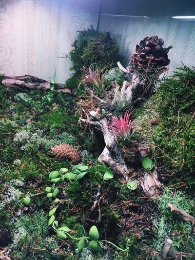 Plants 🌱 Terrarium🍀 Nature Tillandsia