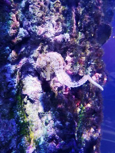 St. Petersburg, Russia Underwater World Oceanarium Eye4photography  Animal Themes Oceananimals