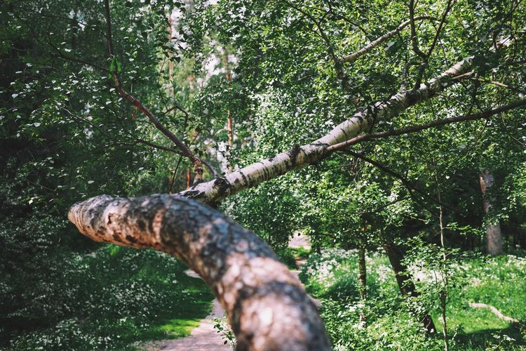View of lizard on tree