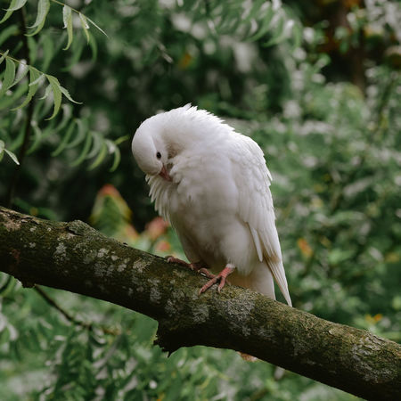 Animal Themes Animal Wildlife Animals In The Wild Beak Beauty In Nature Bird Branch Close-up Focus On Foreground Growth Indoors  Nature No People One Animal Outdoors Perching Pigeon Pigeon Bird  Tree