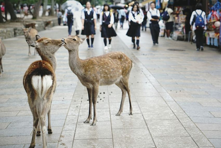 Travel Nara,Japan Kiss Goodday Sweet Smell Hello World Love♡ Animals Helloworld Photos That Will Restore Your Faith In Humanity