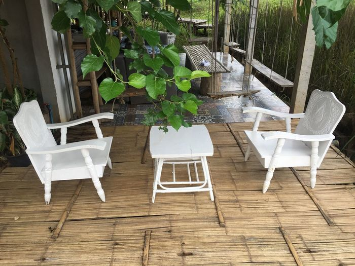 Chair Seat Plant Nature Table Wood - Material No People White Color Tree Front Or Back Yard Potted Plant Growth