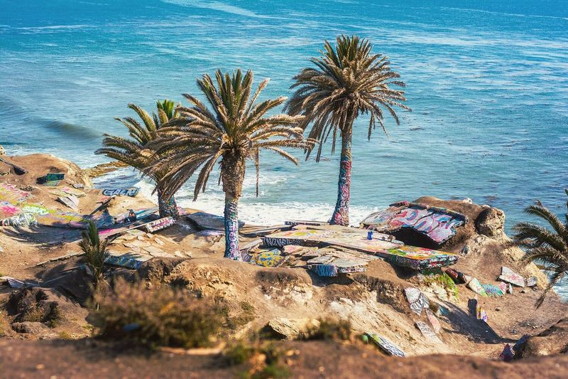 Sunken City Landslide Palm Tree Beach Sea Nature Water Rock - Object Tree No People Day Outdoors Sand Beauty In Nature Scenics Los Angeles, California Sunken City Pacific Ocean