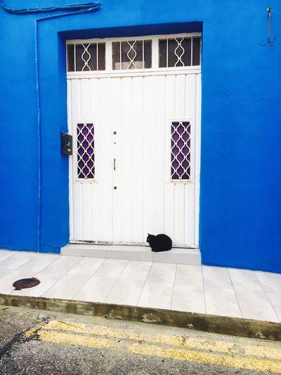 Door Blue Entrance Architecture Building Exterior No People Doorway Entry Building Cat Colorful Malta