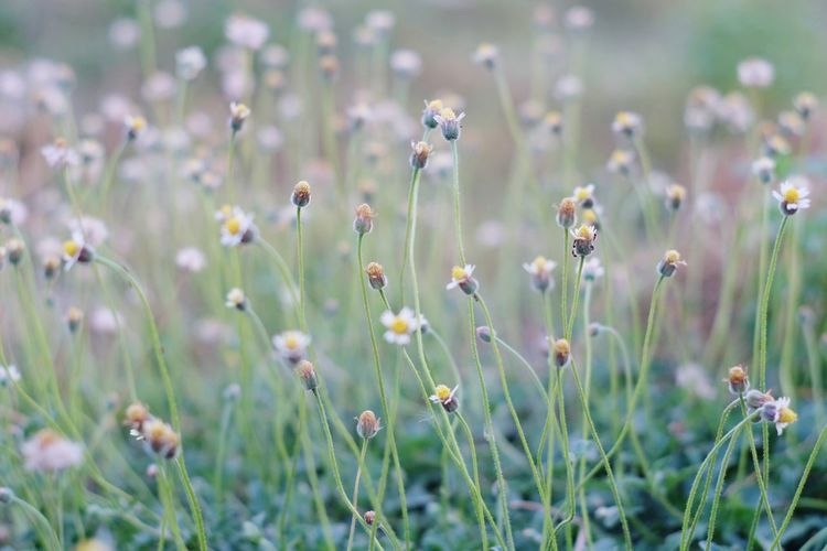 grass Sommer Sunset Flower Head Flower Beauty Uncultivated Close-up Plant Grass Stamen Flowering Plant Blossom Focus Thistle Day Lily