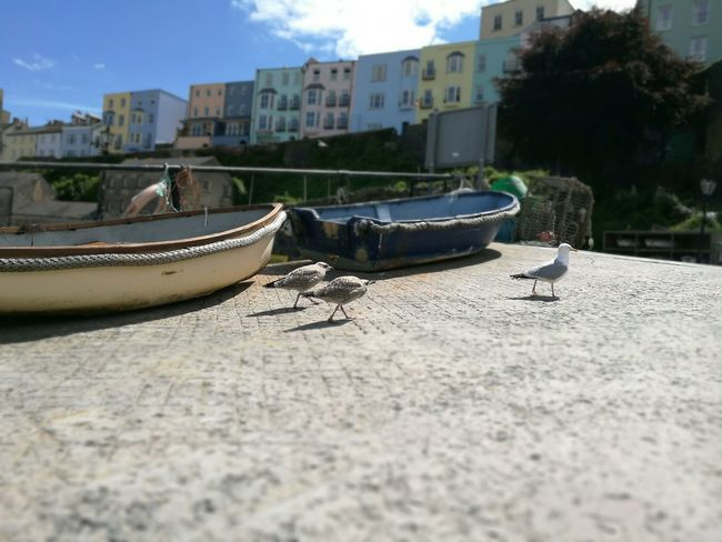 Harbour Harbourside Birds Boats Sailboat Summer ☀ Beach Slipway To Beach Nautical Vessel Sky Copy Space Beauty In Nature Pembrokeshire Coast Tranquil Scene Clear Sky