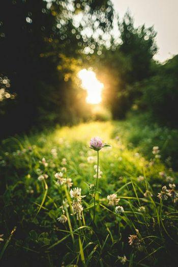 Flower Nature Morning Sunrise No People First Eyeem Photo