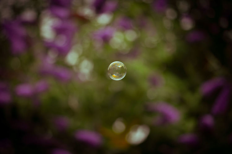 Close-up of bubbles against blurred background