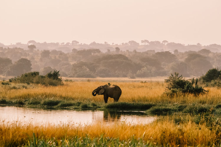 Elephant in field against sky