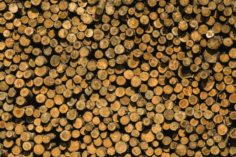 Timber Backgrounds Stack Full Frame Log Pattern Lumber Industry Deforestation Textured  Woodpile Large Group Of Objects Abundance Heap Wood - Material Tree No People Fuel And Power Generation Tree Trunk Close-up Forestry Industry