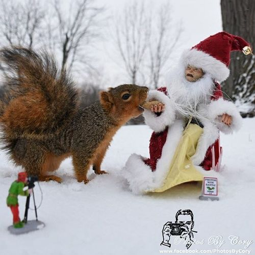 Santa Gollum putting some community service. Funwiththesquirrels Luckywiththeanimals LOTR Gollum Squirrelsofinstagram Squirrel Snow Christmas