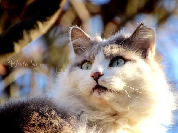 Cat Cat♡ Stray Cat 野良猫 猫 ローアングル Animal Cat Lovers Photography EyeEm Best Shots