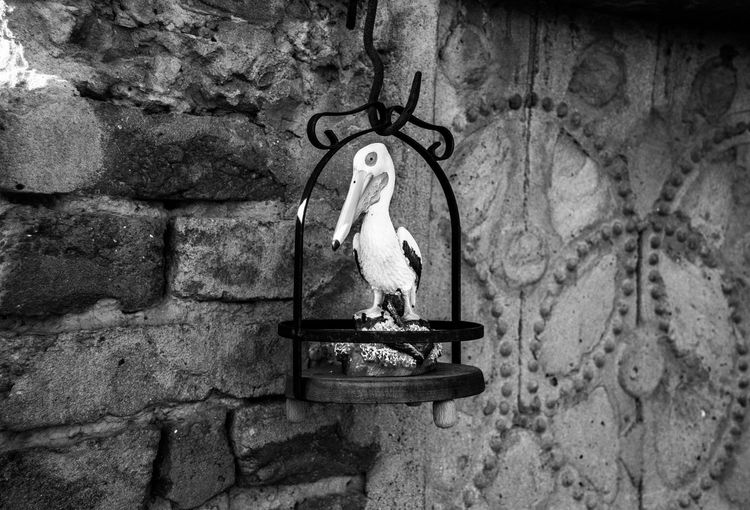 In & out Art And Craft B&w Photography Bird Photography Cage Caged Creativity Eye4photography  EyeEm Gallery Freedom High Angle View Lifestyles This Week On Eyeem