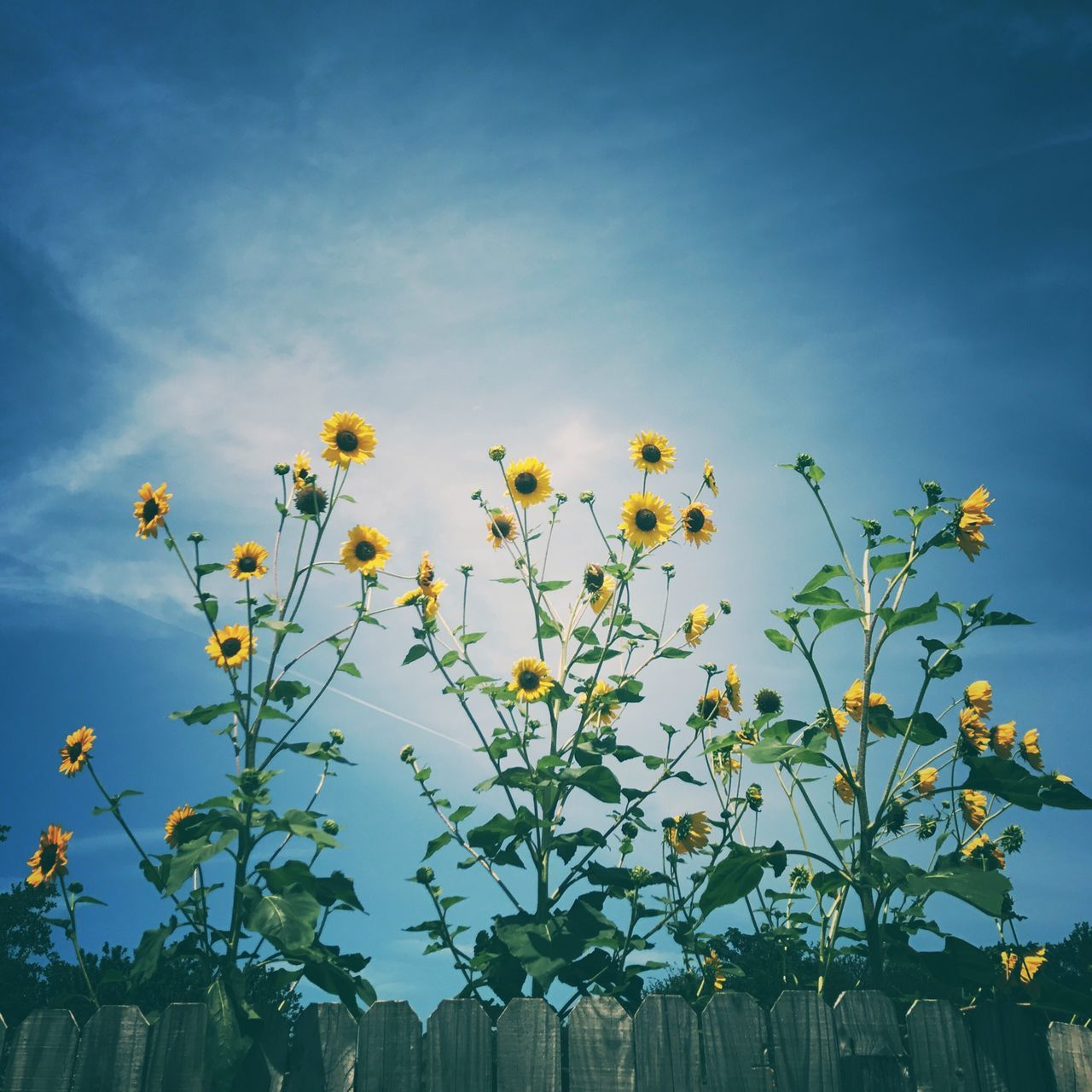 growth, plant, flower, nature, no people, beauty in nature, sky, blue, outdoors, day, fragility, freshness