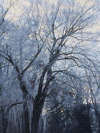 Winter Trees Taking Photos Enjoying Life Eye4photography  Hello World