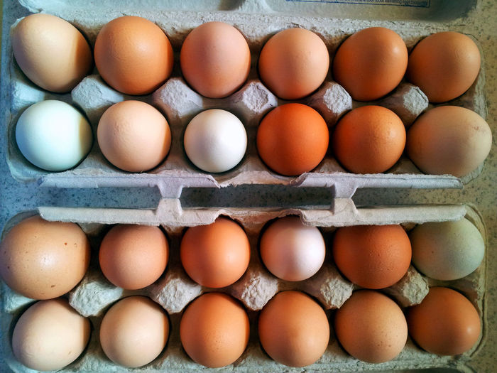 High angle view of eggs in carton