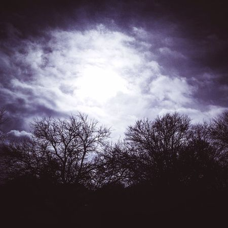 Taking Photos EyeEm Nature Lover Trees Clouds Landscape Nature Collection Sky And Trees January 2015 Thankful Clouds And Sky