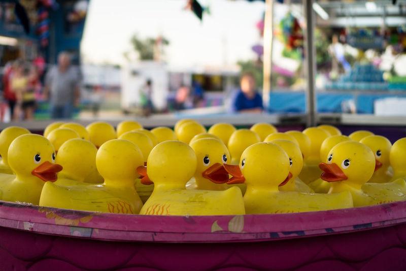 Rubber Ducks In Bucket In Amusement Park