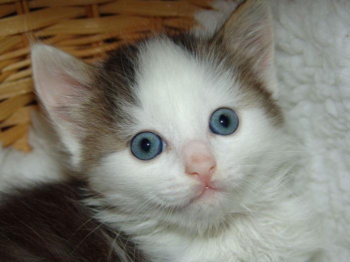 Babycat Babykitty Gattino Katze Katzenbaby Kitten Kitty